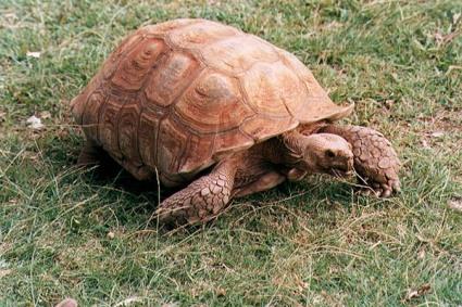 tortoise03tfk
